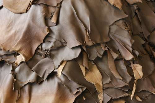 Leather Tannery & Hide Processing